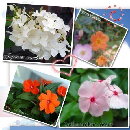 夏の花たち11
