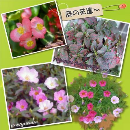 夏の花たち22