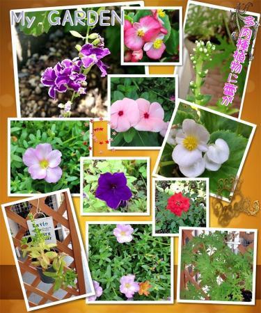 我が家の花たち1