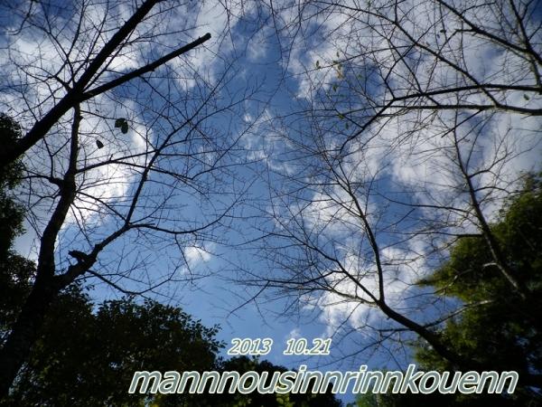 木々の中の青い空