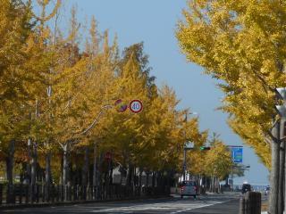 002銀杏並木