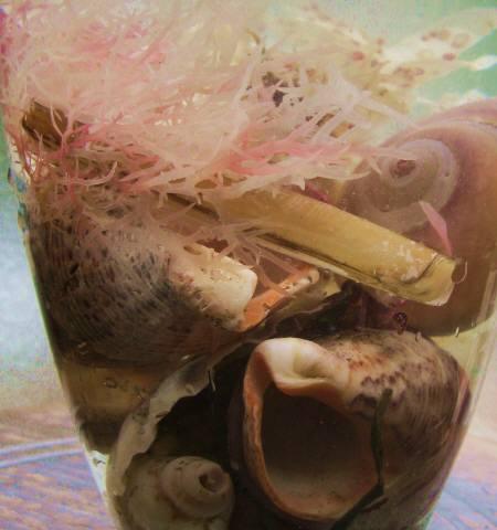 2014_02 02_コップの中の海(海で拾った貝殻と海藻)