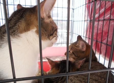 ベスさん子猫3匹
