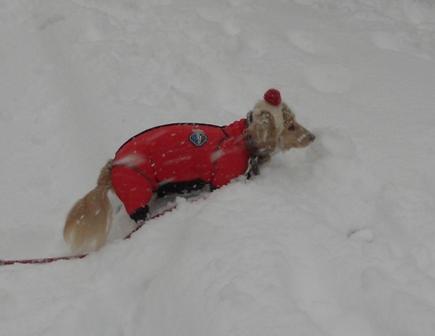 大雪20140208オリーブ1