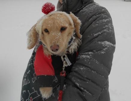 大雪20140208オリーブ抱っこ
