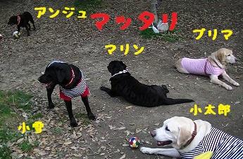 20130414_7.jpg