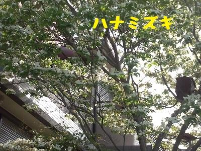 20130425_1.jpg