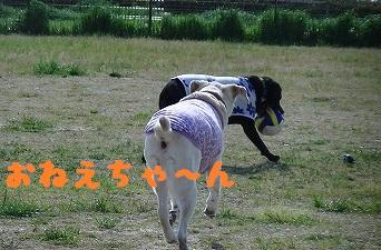20130427angekotarou2.jpg