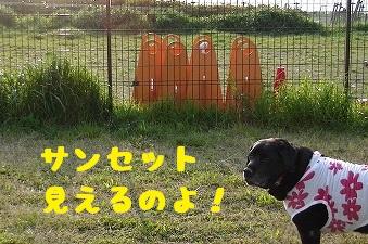 20130427marine3.jpg