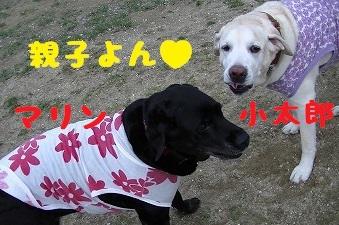 20130427marinekotarou1.jpg