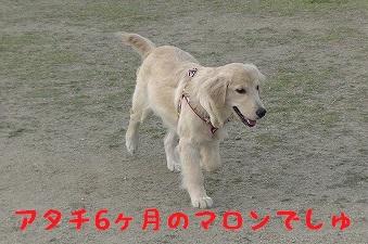 20130429_1.jpg