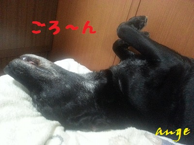 20130604ange3.jpg