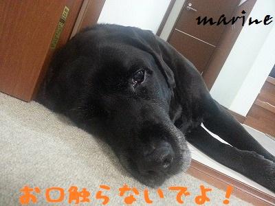 20130604marine4.jpg