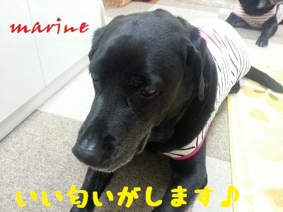 20130608marine1.jpg