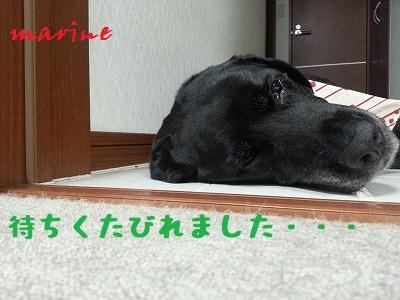20130623marine4.jpg