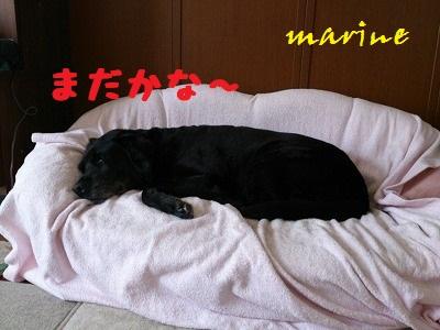 20130712marine3.jpg