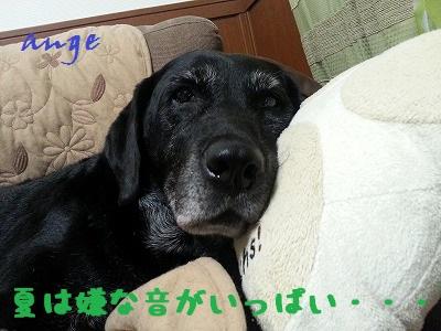 20130801ange5.jpg