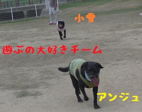 20130804_5.jpg
