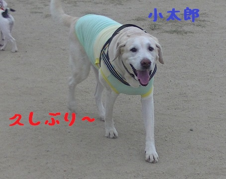 20130804kotarou1.jpg