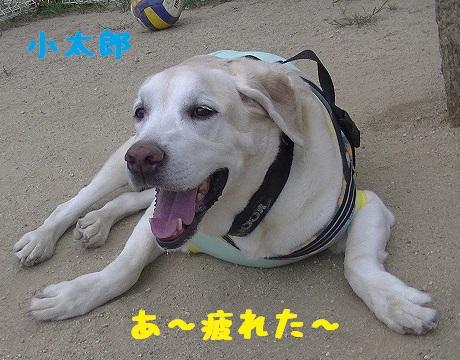 20130804kotarou2.jpg