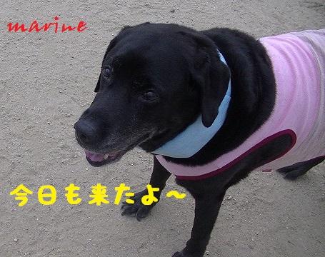 20130804marine1.jpg