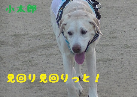 20130817kotarou3.jpg