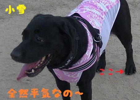 20130817koyuki1.jpg