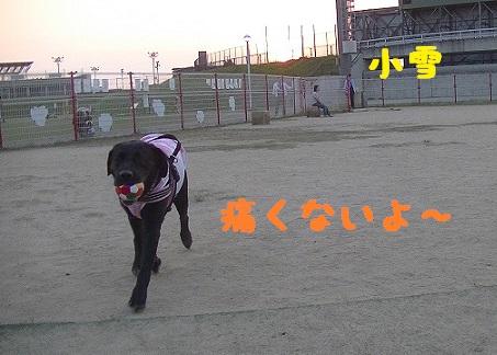 20130817koyuki2.jpg