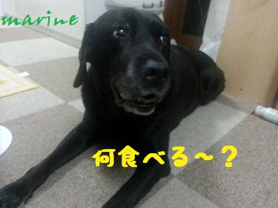 20130824marine2.jpg