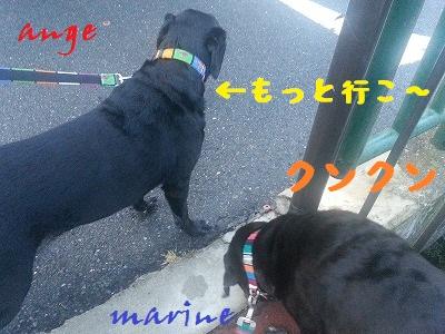 20130824marineange1.jpg