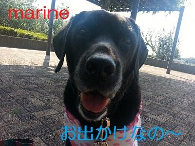 20130829marine1.jpg
