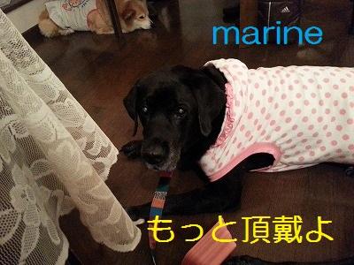 20130829marine3.jpg
