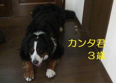 20130830_4.jpg