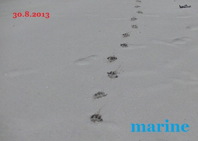 20130830marine4.jpg