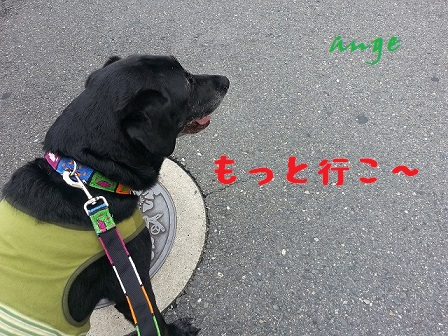 20130903ange1.jpg