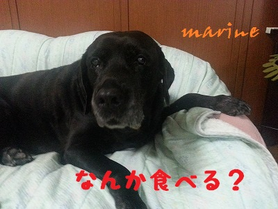 20130910marine4.jpg