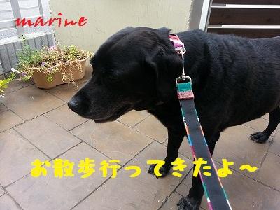 20130914marine1.jpg