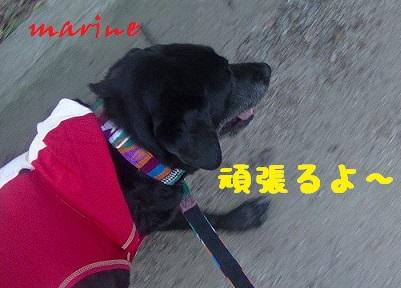 20130923marine5.jpg