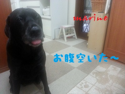 20130930marine3.jpg