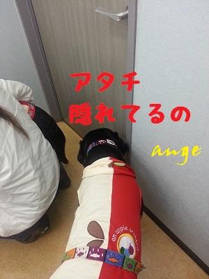 20131019ange3.jpg