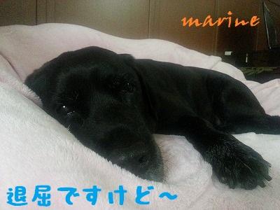 20131020marine3.jpg