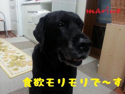 20131023marine5.jpg