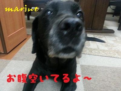20131025marine1.jpg