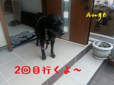 20131026ange4.jpg