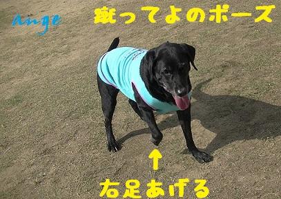 20131027ange4.jpg