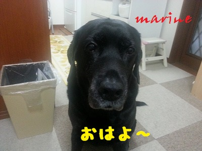 20131030marine1.jpg
