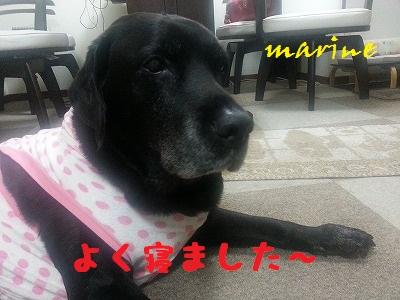 20131031marine1.jpg