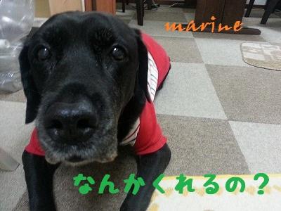 20131101marine5.jpg