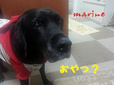 20131101marine7.jpg
