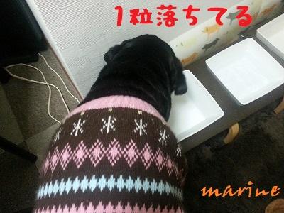 20131122marine1.jpg